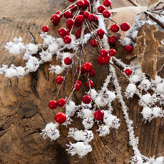 Weihnachtsbaumzweige