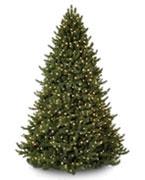 Bäume 400 € - 499 €