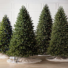 Best Sellers Christmas Trees